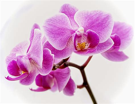 flower orchids shijie is unstoppable august 2014