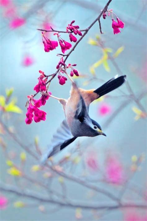 bird flowers art backgrounds iphone smart phone htc