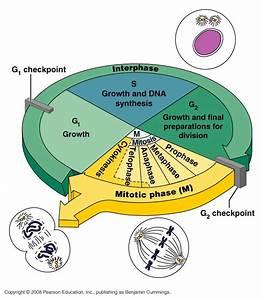 Csir Life Science Preparation  Fundamental Processes
