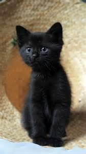 Adorable Cat Cute