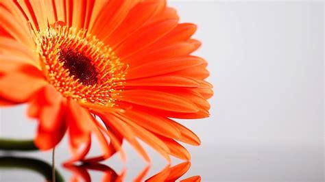 amazing sunflower hd desktop background wallpapers