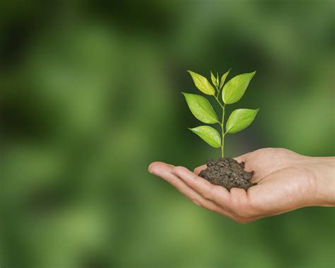 how to plant trees tree plant www pixshark com images galleries with a bite