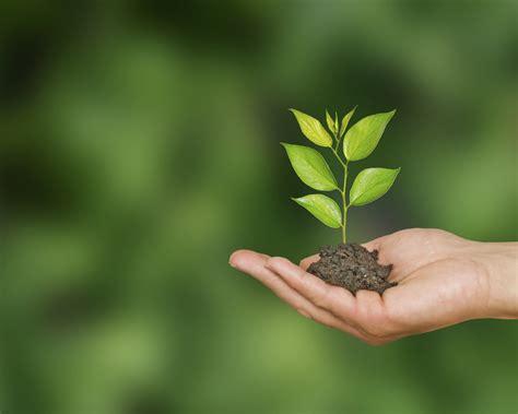 Media Alert Volunteers To Plant 5230 Trees At Uq St Lucia