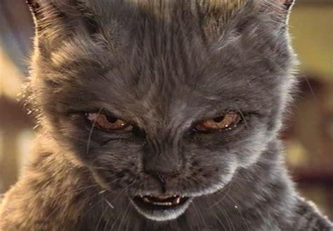imagenes de gatos  perfil de whatsapp fondos