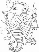 Seahorse Coloring Printable Horse Seahorses Sea Colouring Worksheets Safety Sheet Everfreecoloring Printables Worksheet Unicorn Ears Language Drawing Animal Drawings Worksheeto sketch template