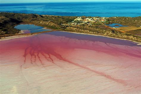 pink lake hutt lagoon abc news australian broadcasting corporation