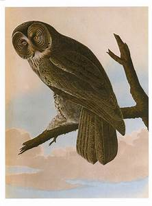 Vintage Owl Illustrations in the Public Domain | Free ...