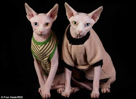 sphynx cat   fur   wardrobe  jackets