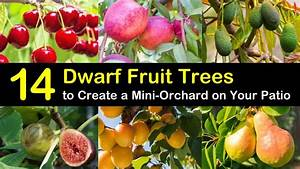 14 Dwarf Fruit Trees To Create A Mini