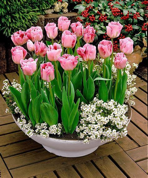 Garten Tulpen Pflanzen by Tulpen Ang 233 Lique Blumenzwiebeln Bakker 2 Packung