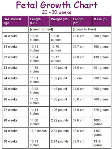 Janin Usia 6 Bulan How Much Should Your Baby Weigh At 29wks Babygaga