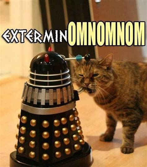 Doctor Who Cat Meme - cat vs dalek doctor who pinterest cats