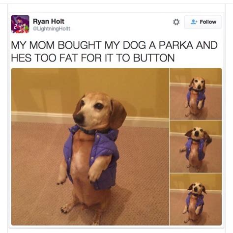 Fat Dog Meme - fat dog in a little coat dogs pinterest fat dogs dogs and dog
