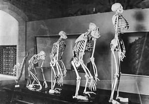 Human Evolution: Africa Exodus Made Homo Sapiens Shorter ...