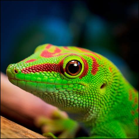 lizard colourful google search gods creatures