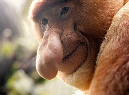 ugliest animals  earth  underwaterand   air
