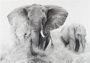 Elephants In The Dust Drawing by Stephen McCall