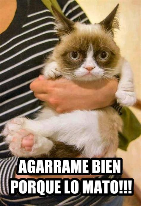 Gato Meme - cat memes in spanish