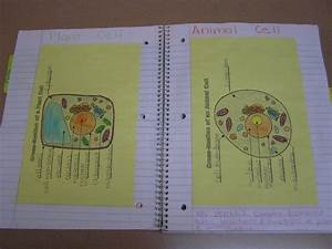 26 Best Images About Plant And Animal Cells      5th Grade
