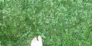Quecke Im Rasen : unbekanntes unkraut siehe anhang ~ Lizthompson.info Haus und Dekorationen