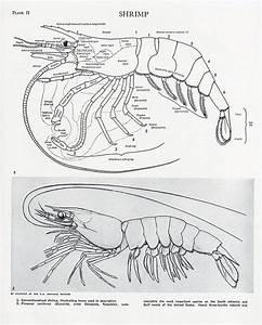 10 Best Images About Phylum Arthropoda On Pinterest