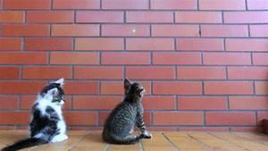 hugging kittens gif | WiffleGif