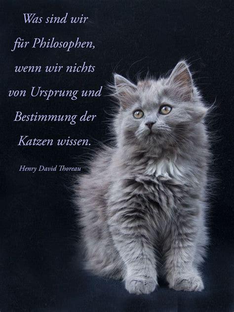 die bestimmung der katzen aus sicht der philosophen