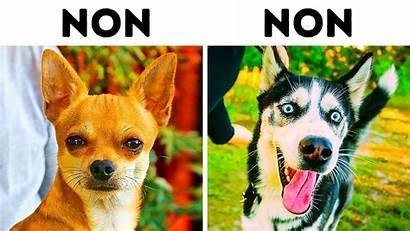 Dog Breeds Families Dogs Dangerous Chien Children
