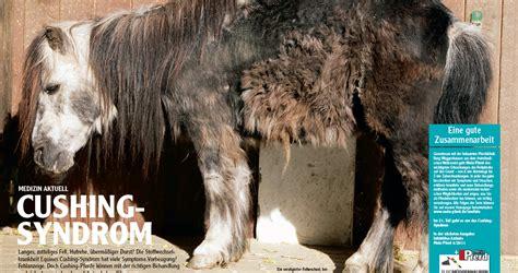 medizin serie teil  cushing syndrom mein pferd mein