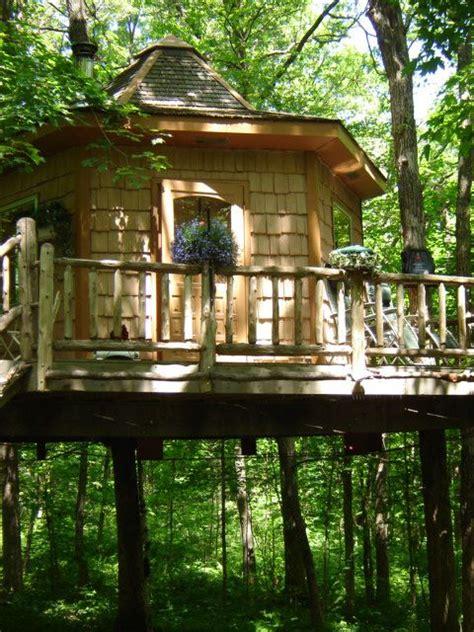 sleep beneath  forest canopy   treehouse hotel