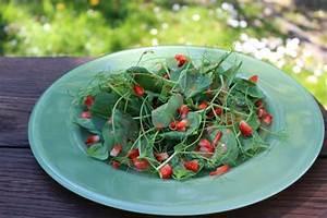 Spinat Als Salat : spinat erbsensprossen salat mit rosa erdbeerdressing ~ Orissabook.com Haus und Dekorationen