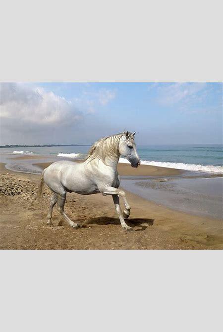 pictures: top 10 horse wallpaper, horse wallpaper