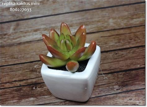 jual tanaman hias kaktus mini lapak intenseshop intense