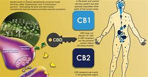 Graviolateam Finland  The Endocannabinoid System For Dummies