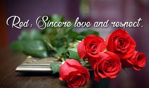 feb  rose day images gif hd pics    whatsapp dp facebook profile