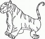 Coloring Tiger Pages Cubs Printable Popular sketch template