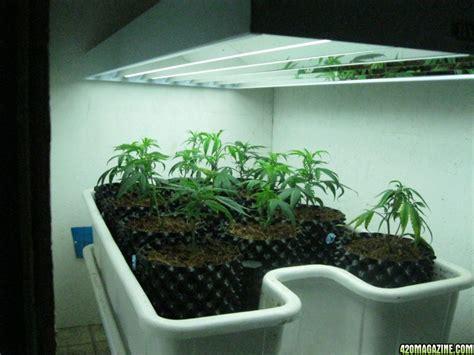 best grow lights for seedlings fluorescent lighting best fluorescent light for plants