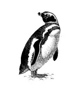 Black and White Penguin Drawings