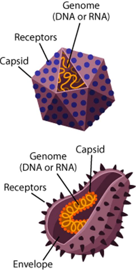 virus   biologist