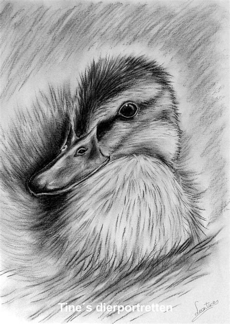 drawing images  pinterest charcoal drawings