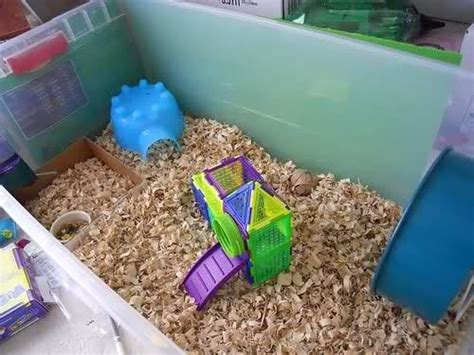 Hamster Bedding Petsmart by What Are The Best Hamster Cages In Petsmart Quora