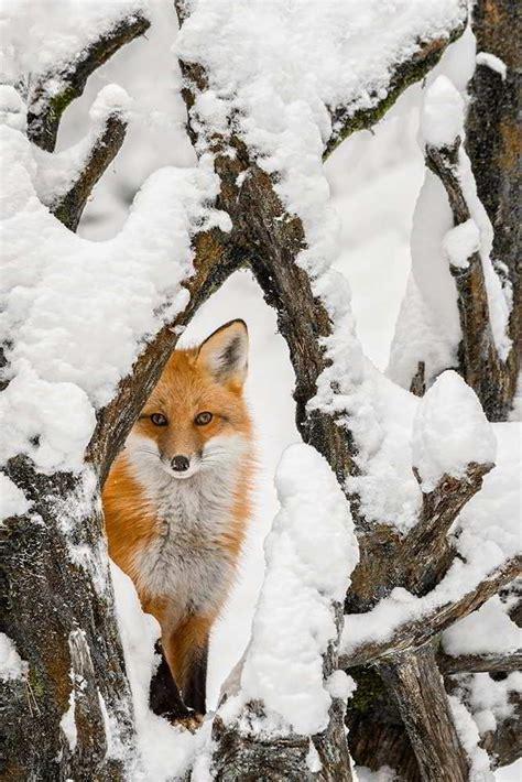 wildlife photography wildlife prints photography tips