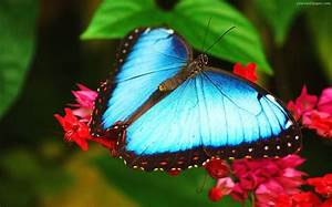 Top 10 Most Beautiful Butterflies of the World « The ...