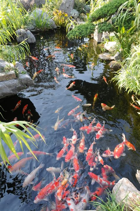 fish pond in garden 17 best ideas about koi ponds on pinterest pond fountains koi fish pond and diy pond