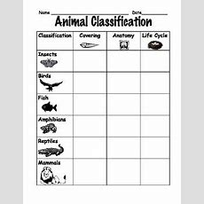 Animal Classification Comparison Chart For First Or Second Grade