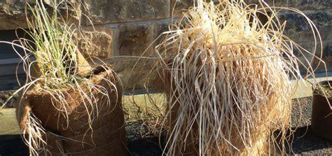 Kübelpflanzen überwintern  Praktische Tipps Für Den Winter