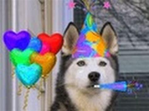 happy  birthday  shiloh  siberian husky youtube