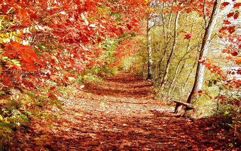Autumn Fall Desktop Backgrounds by Wallpapers Beautiful Autumn Scenery Wallpapers