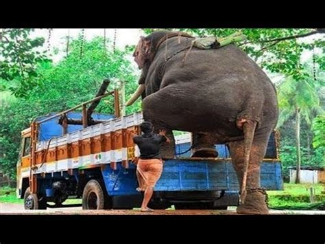 elephant tub india access
