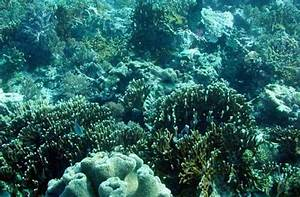 Biological science: Coral Mania